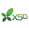 Green Tea X50